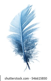 blue feather on a white background