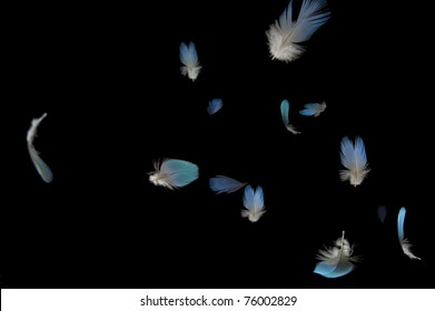 Blue Feathers falling with black background. Composite image with selective focus.