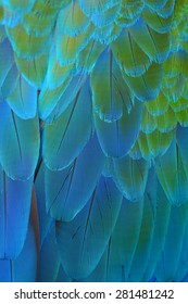 Blue feathers, Harlequin Macaw feathers background texture