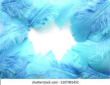 Blue feathers on white background. Beautiful creative frame with space for text. Background.