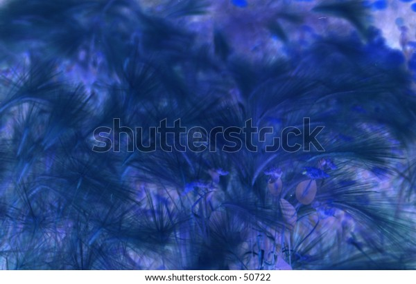 blue feathery background