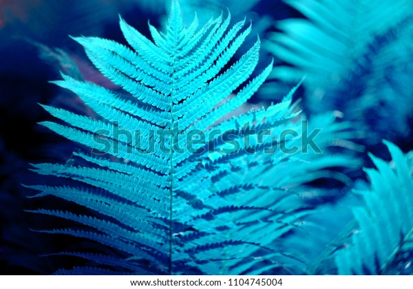 Blue Fern Leaf Neon Colors Wallpaper Stock Photo Edit Now