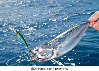 Blue fin tuna Mediterranean big game fishing