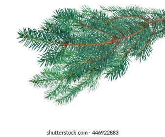 blue fir branches isolated on white background