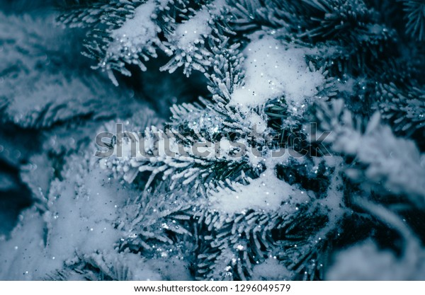 Blue fir decorated with silver glitter close up. Christmas and new year background