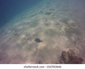 Blue Fish Off of Little Bonaire