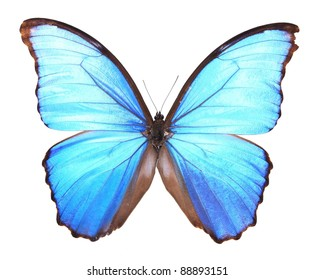 Blue Flash Butterfly isolated on a white background