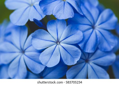 Blue flower close up