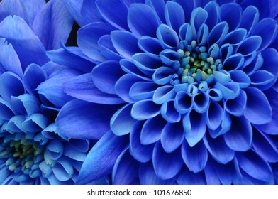Blue flower close up for background or texture