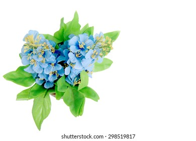 Blue flower for copy space on white background