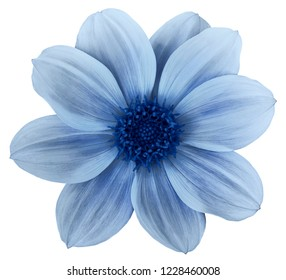 Blue flower dahlia isolated on white background. For design. Closeup. Nature.