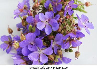 Blue flower of Geranium pratense or Meadow geranium on whiten background .