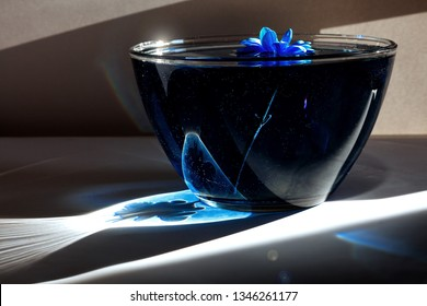 Blue flower in glass plate with water and blue acrylic paint. Bright rays sunlight with shadow on white background and blue astra. Still life. Top view
