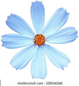 Blue flower isolated on a white background