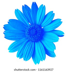 blue flower isolated on white background. Flower bud close up.  Element of design.
