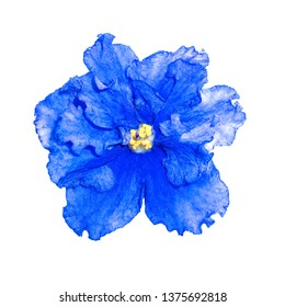 Blue flower isolated on white background.