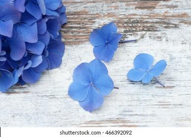 blue flower  lying on wood