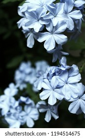 blue flower mavi çiçek