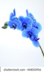 Blue flower orchid on light background