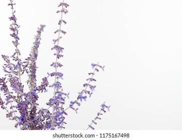 Blue Spires Images, Stock Photos & Vectors   Shutterstock