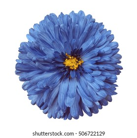 Blue flowers with yellow center images stock photos vectors blue flower white isolated background with clipping path closeup no shadows yellow mightylinksfo