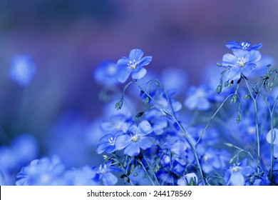 Blue flower images stock photos vectors shutterstock blue flowers mightylinksfo