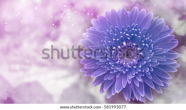 Blue flowers with blur backgrounds,Imagination.