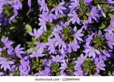 Blue flowers in close up - Shutterstock ID 1238449444