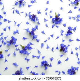 blue flowers cornflowers pattern on white background. top view.