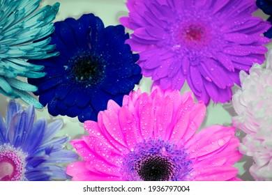 Blue Flowers Grow on a Meadow