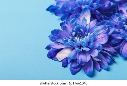 blue flowers on a blue background