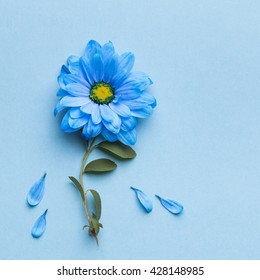 blue flowers on blue background. Blooming concept. Flat lay.