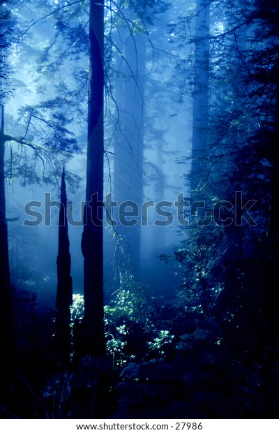 Blue forest.