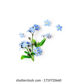 Blue forget me not flowers creative composition isolated on white background clipping path included. Springtime and mothers day concept. Design element, flat lay, top view