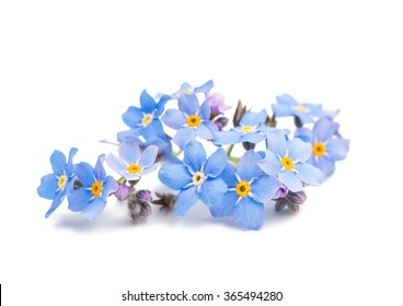 1000 Forget Me Not Pictures Royalty Free Images Stock Photos