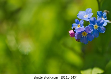 Blue forget-me-nots with the worm