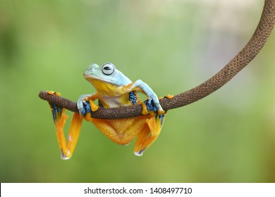 blue frog stay on branch with green background