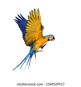 Blue and gold macaw (Ara ararauna) bird in flight.