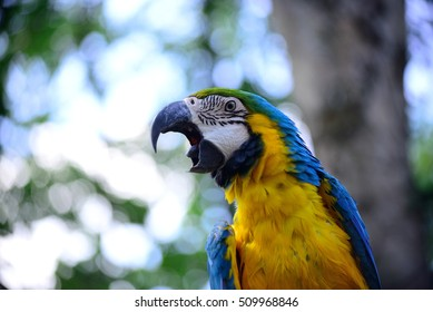 Blue and Gold Macaw  beautiful.