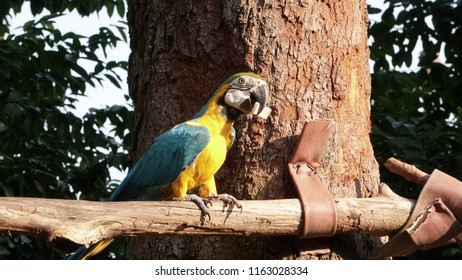 Blue and Gold Macaw Bird at zoo