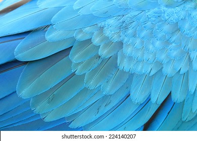 Blue and Gold Macaw feathers.