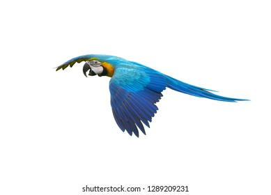 Parrot In Flight White Background Images Stock Photos Vectors
