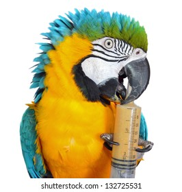 Blue and Gold Macaw with Formula