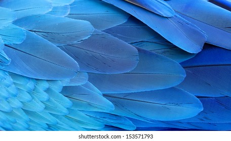 Blue and Gold Macaw wing feathers