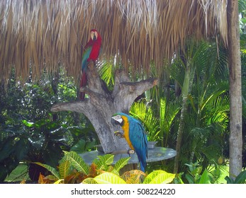 Blue and gold macaws / Blue and yellow Macaw and Red Macaw - Big parrot. (Ara ararauna), also known as the blue and gold macaw, a large parrot in South America with a blue top and yellow under parts.