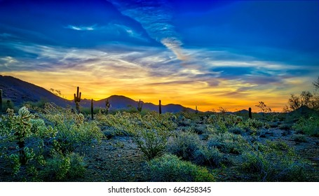 Blue and Gold Sunrise - Desert flora in full bloom provide a frame for a colorful Scottsdale,  Arizona sunrise, rich with golds and blues.