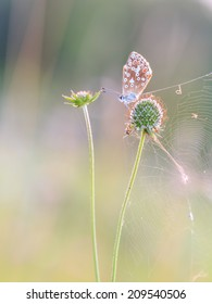 Blue Gossamer winged Butterfly in the evening sun with blurred background. Intended Blurredness