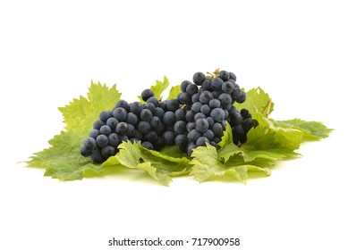 Blue grape with leaves isolated on white background. Blue muscat grapes.