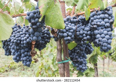 Blue grapes in the array