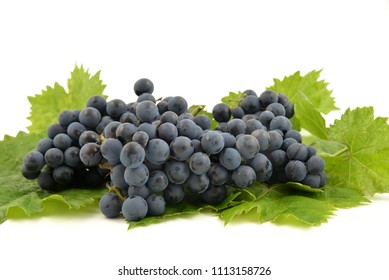 Blue grapes and bright grape leaves on white background isolated, close up.
